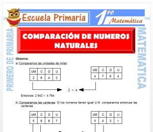 Ficha de Comparando a Los Numeros Naturales para Primero de Primaria