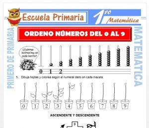 Ficha de Ordeno Los Números del 0 al 9 para Primero de Primaria