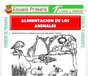 Ficha de Alimentacion de Los Animales para Primero de Primaria