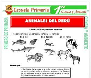 Ficha de Animales del Perú para Primero de Primaria