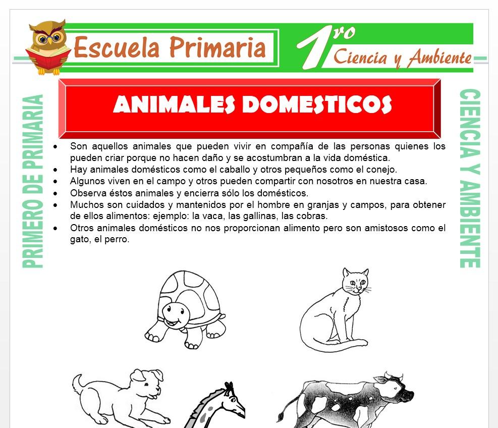 Ficha de Animales Domesticos para Primero de Primaria