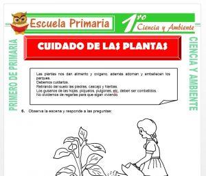 Ficha de Cuidado de Las Plantas para Primero de Primaria