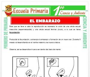 Ficha de El Embarazo para Primero de Primaria