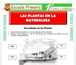Ficha de Las Plantas en La Naturaleza para Primero de Primaria