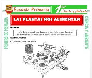 Ficha de Las Plantas nos Alimentan para Primero de Primaria