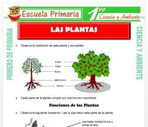 Ficha de Las Plantas para Primero de Primaria