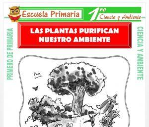 Ficha de Las Plantas Purifican Nuestro Ambiente para Primero de Primaria