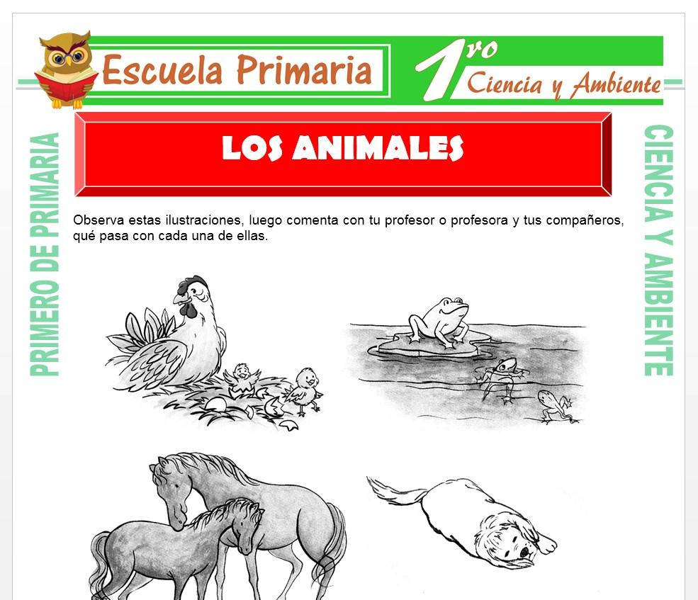 Ficha de Los Animales para Primero de Primaria
