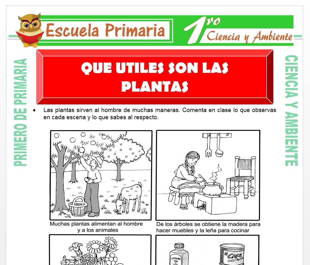 Ficha de Que Utiles son Las Plantas para Primero de Primaria