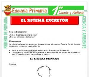 Ficha de Sistema Excretor para Primero de Primaria
