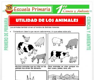 Ficha de Utilidad de Los Animales para Primero de Primaria