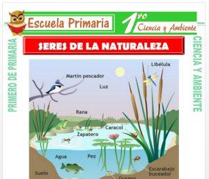 Ficha de Los Seres de La Naturaleza para Primero de Primaria