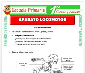 Ficha de Aparato Locomotor para Primero de Primaria