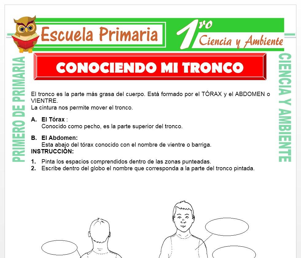 Ficha de Conociendo Mi Tronco para Primero de Primaria