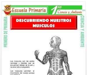 Ficha de Descubriendo Nuestros Musculos para Primero de Primaria