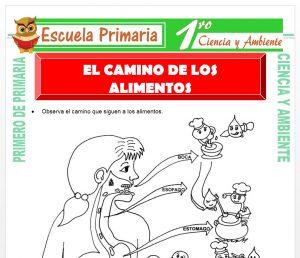 Ficha de El Camino de Los Alimentos para Primero de Primaria
