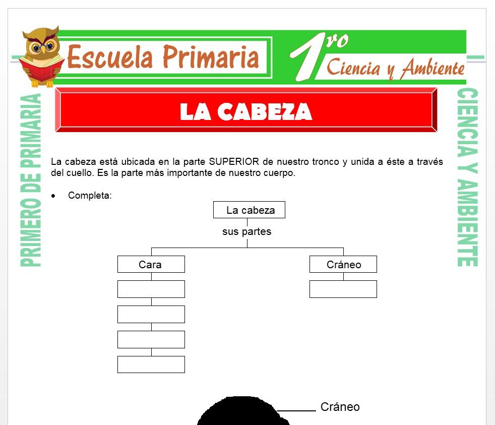 Ficha de La Cabeza para Primero de Primaria