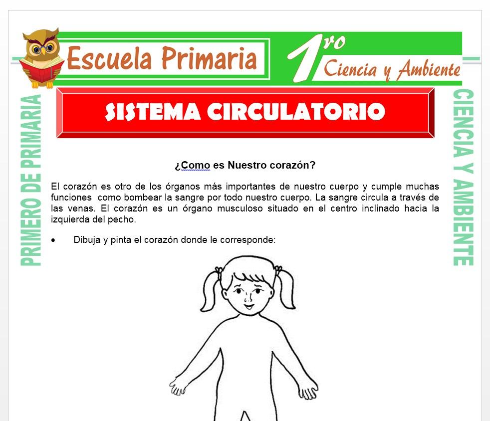 Ficha de Sistema Circulatorio para Primero de Primaria