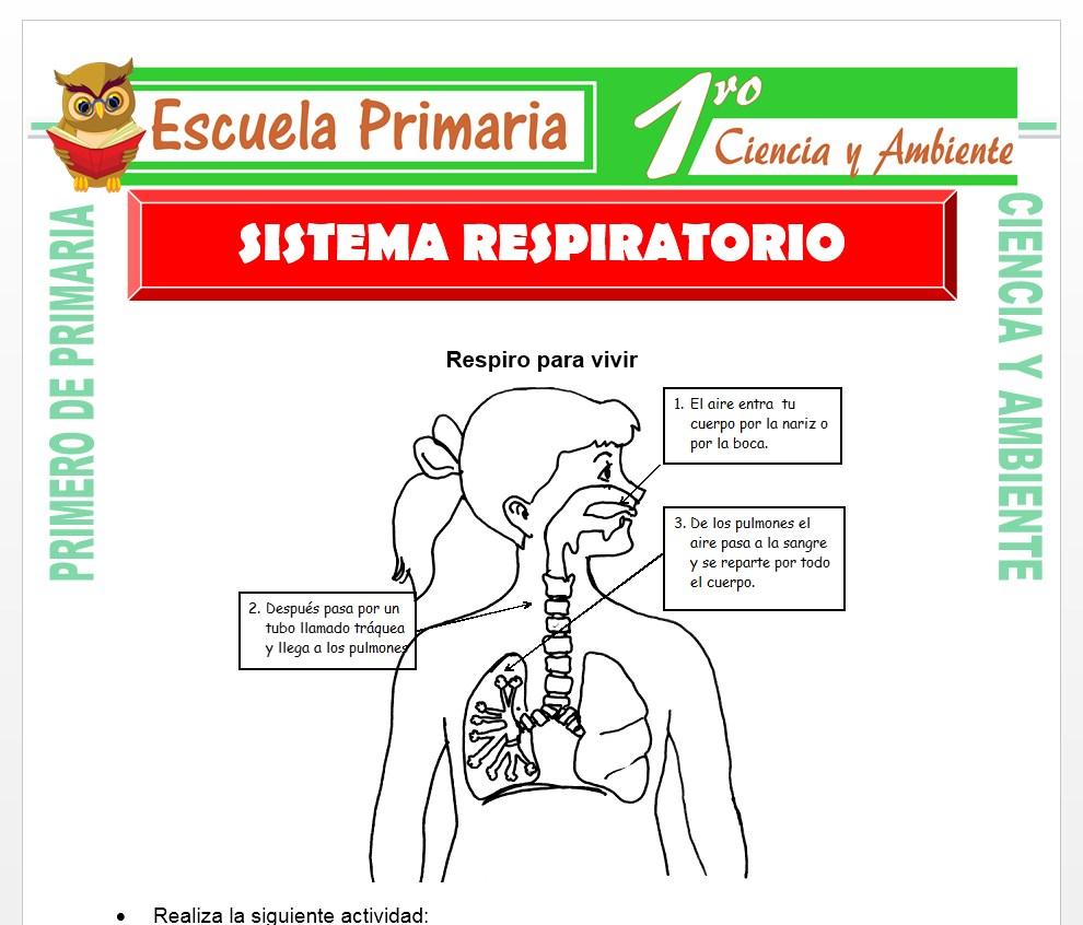 Ficha de Sistema Respiratorio para Primero de Primaria