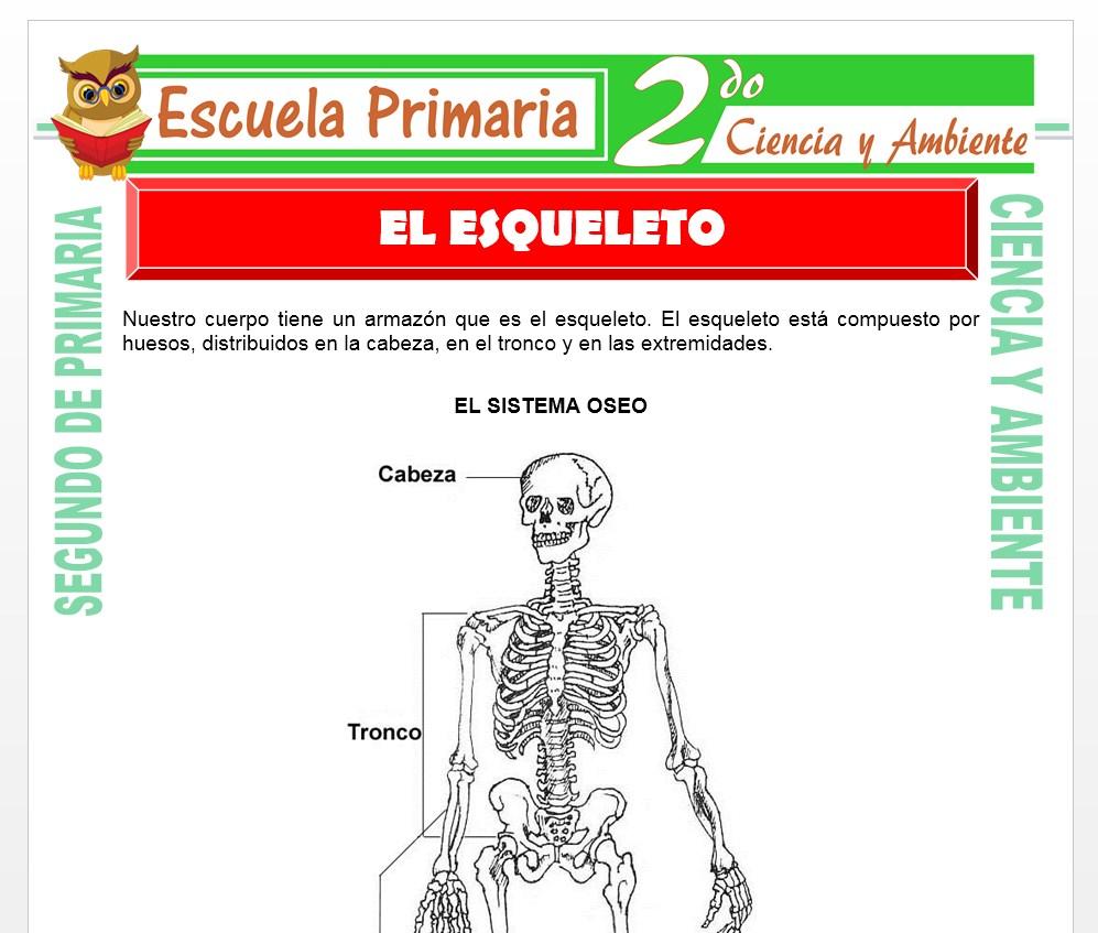 Ficha de El Esqueleto para Segundo de Primaria