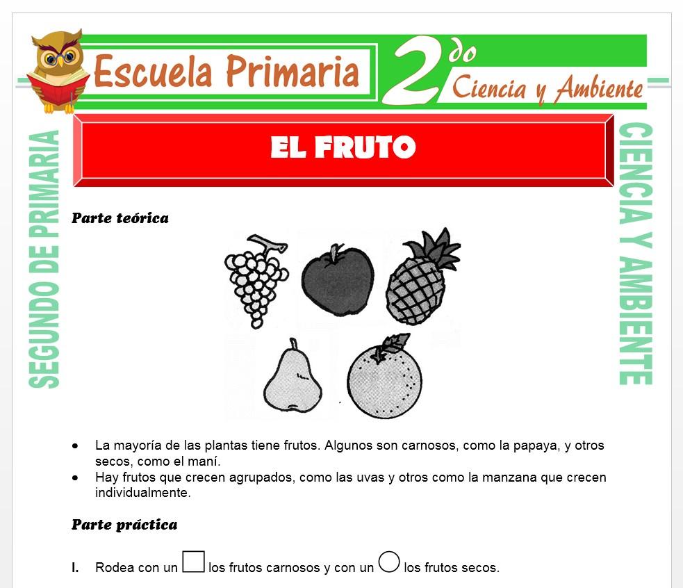 Ficha de El Fruto para Segundo de Primaria