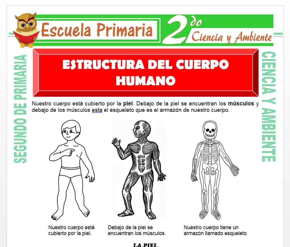 Ficha de Estructura del Cuerpo Humano para Segundo de Primaria