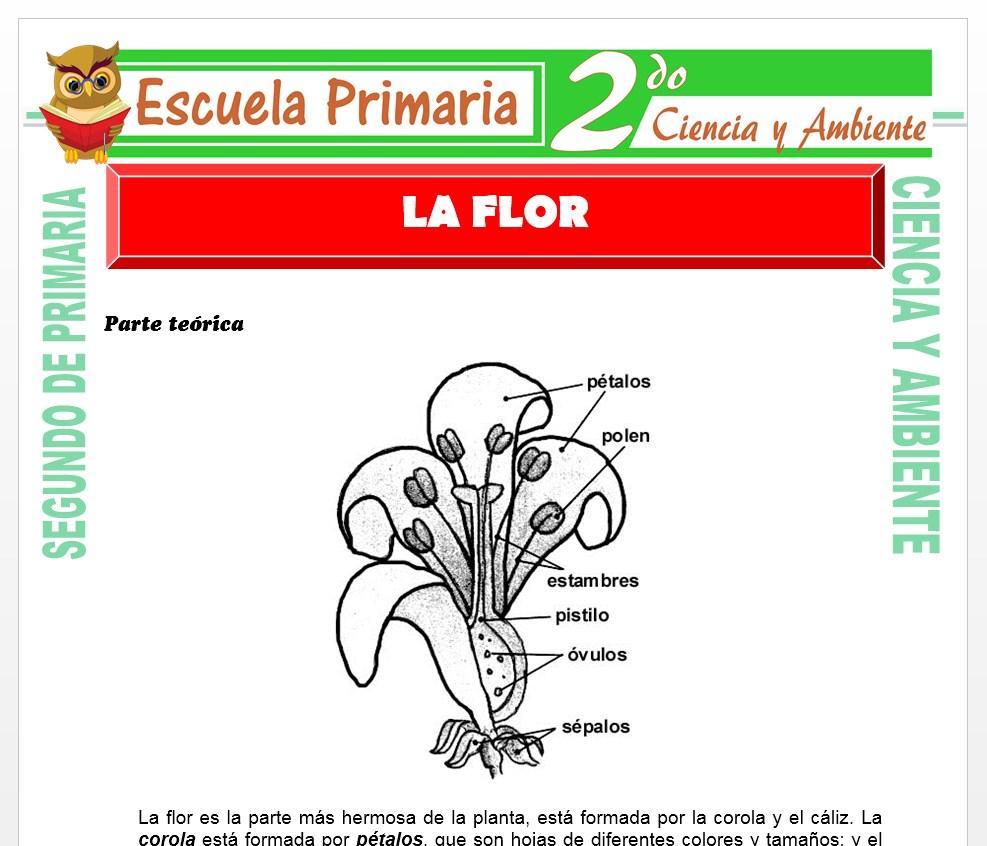 Ficha de La Flor para Segundo de Primaria