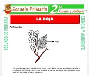 Ficha de La Hoja para Segundo de Primaria