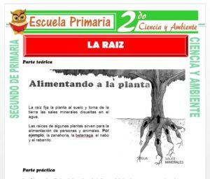 Ficha de La Raiz para Segundo de Primaria