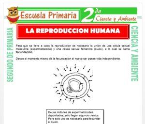 Ficha de La Reproducción Humana para Segundo de Primaria