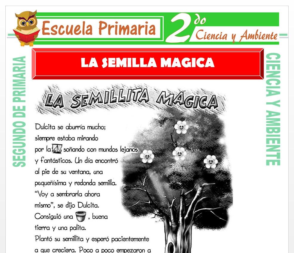 Ficha de La Semilla Magica para Segundo de Primaria