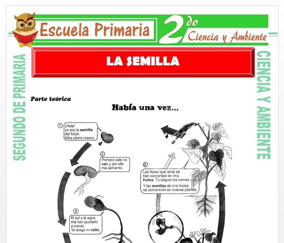Ficha de La Semilla para Segundo de Primaria
