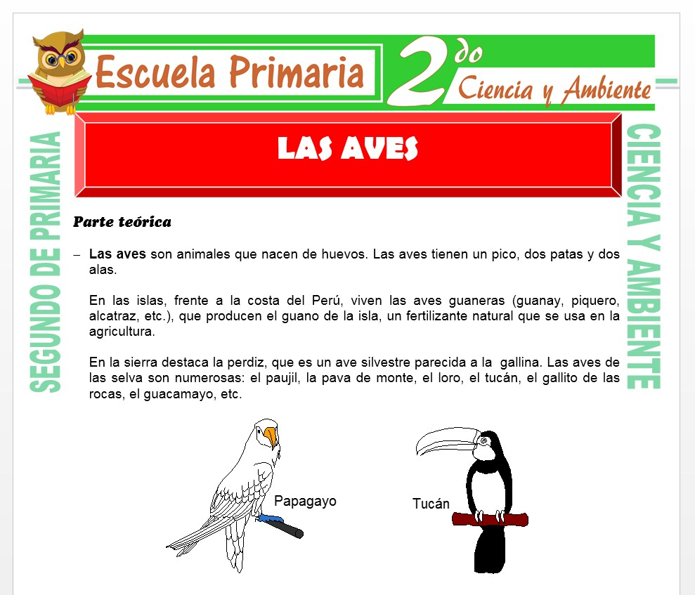 Modelo de la Ficha de Las Aves para Segundo de Primaria
