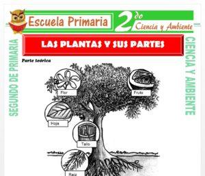 Ficha de Las Plantas y sus Partes para Segundo de Primaria