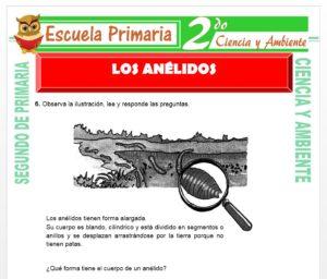 Ficha de Los Anélidos para Segundo de Primaria