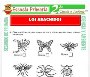 Ficha de Los Aracnidos para Segundo de Primaria