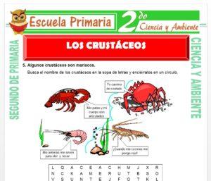 Ficha de Los Crustáceos para Segundo de Primaria