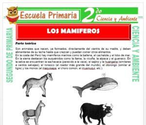 Ficha de Los Mamiferos para Segundo de Primaria