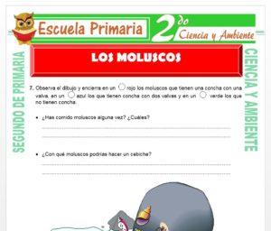 Ficha de Los Moluscos para Segundo de Primaria