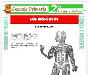 Ficha de Los Músculos para Segundo de Primaria