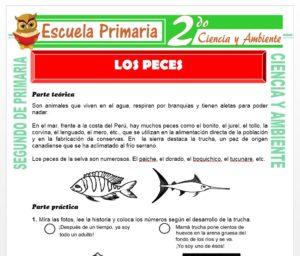 Ficha de Los Peces para Segundo de Primaria