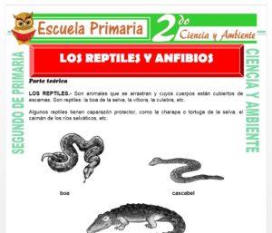 Ficha de Los Reptiles y Anfibios para Segundo de Primaria