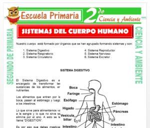 Ficha de Sistema del Cuerpo Humano para Segundo de Primaria
