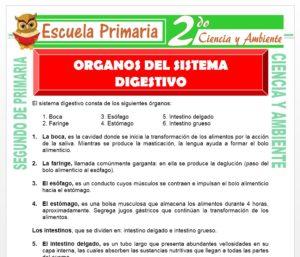 Ficha de Sistema Digestivo para Segundo de Primaria