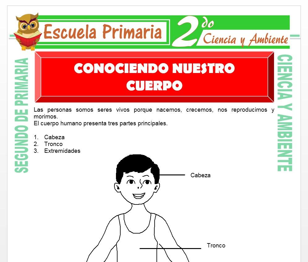 Ficha de Conociendo Nuestro Cuerpo para Segundo de Primaria