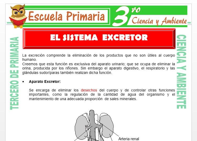 Ficha de Aparato Excretor para Tercero de Primaria