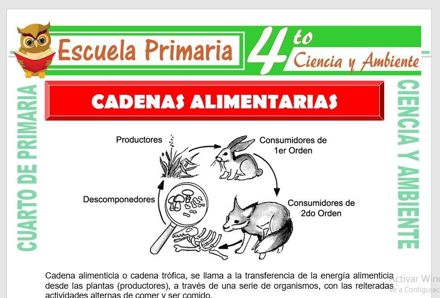 Cadena Alimentaria Para Cuarto De Primaria Escuela Primaria