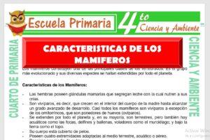 Ficha de Características de Los Mamiferos para Cuarto de Primaria