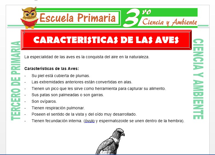 Ficha de Caracteristicas de las Aves para Tercero de Primaria