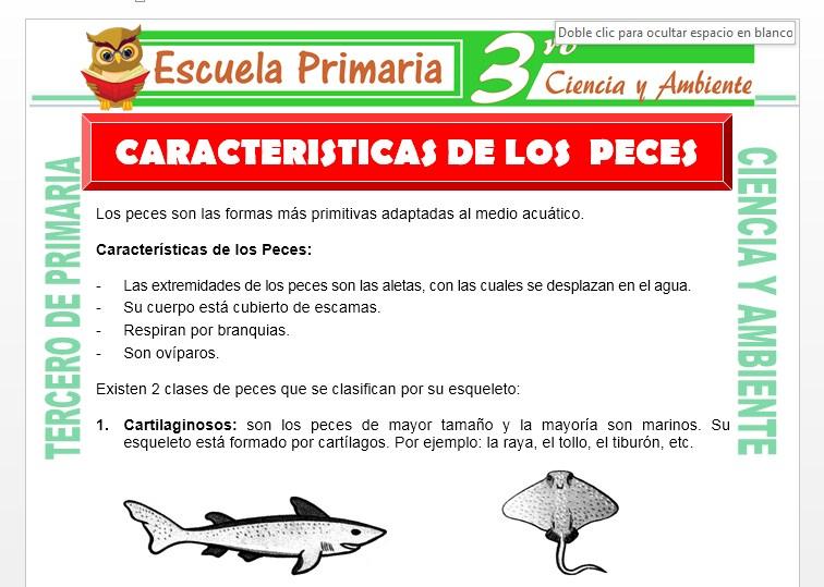 Ficha de Características de los Peces para Tercero de Primaria